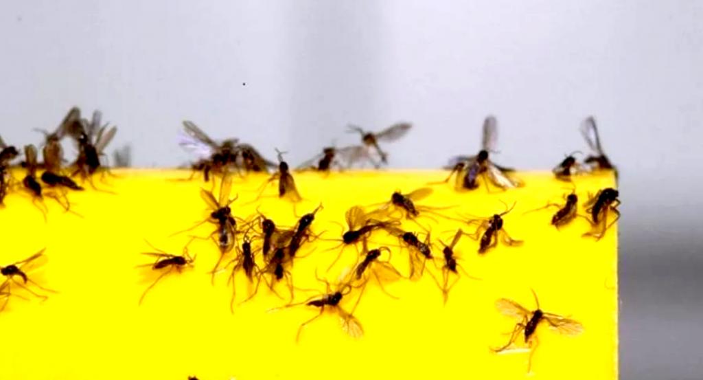 Как избавиться от мух и мошкары