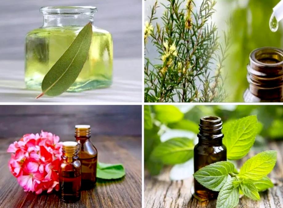 Как избавиться от мух ароматами