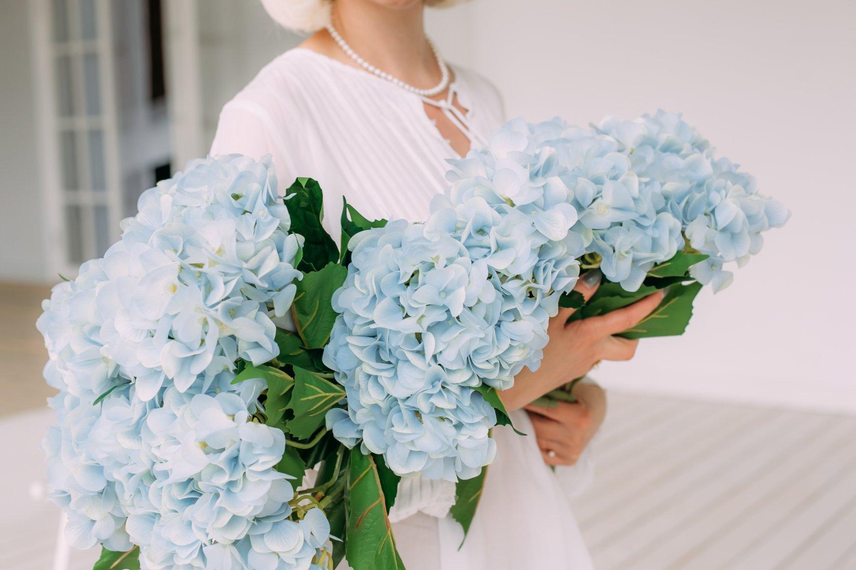 Гортензия: кому можно дарить эти цветы, согласно их знаечнию? 11