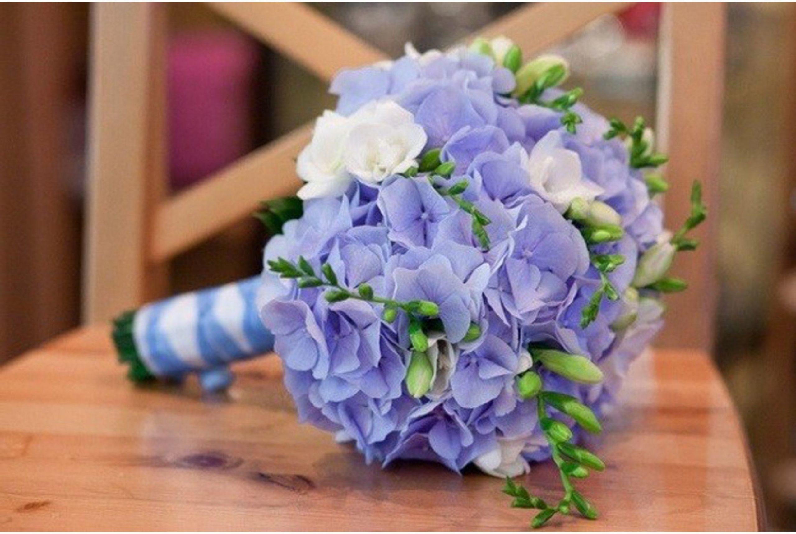 Гортензия: кому можно дарить эти цветы, согласно их знаечнию? 13